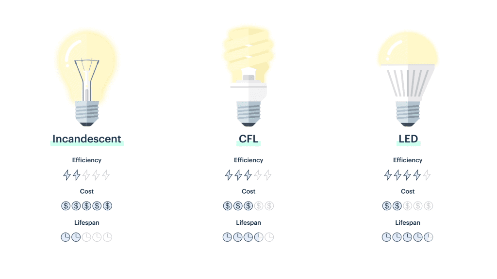 Different types of bulbs